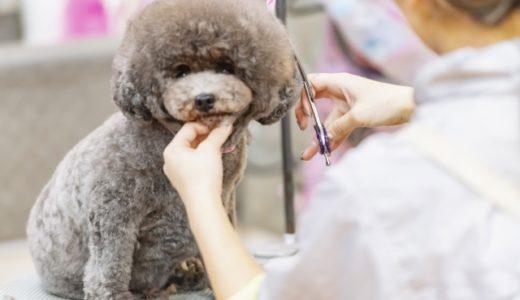 [プロトリマーが教える]犬のシャンプーカットどれくらいの期間で行くのがいいの?