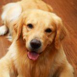 [新規開業トリマーさん向け]  大型犬するかどうか