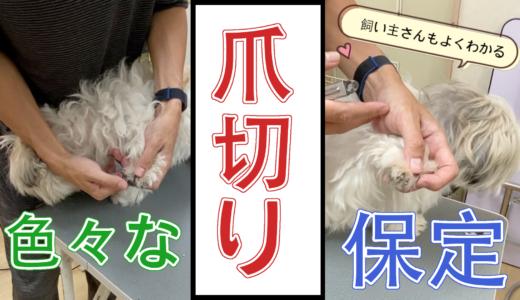 【犬の爪切り】有効な保定の仕方